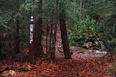 Sill Branch Falls Trail (go left)