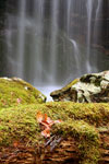 Moss at Pine Ridge Falls