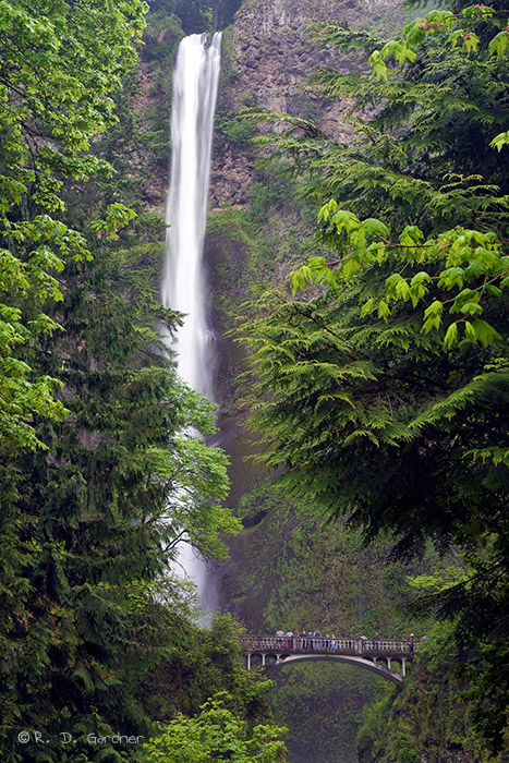 The upper portion of Multnomah Falls