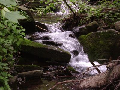 One of several cascades at Falls Hollow